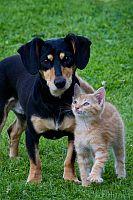 pet care cat dog